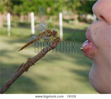 Kiss Of The Dragonfly