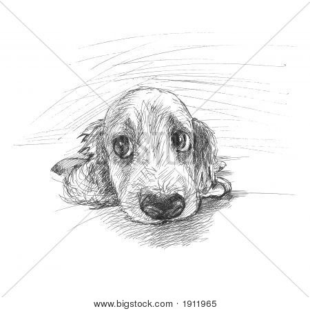 Cute Puppy Sketch