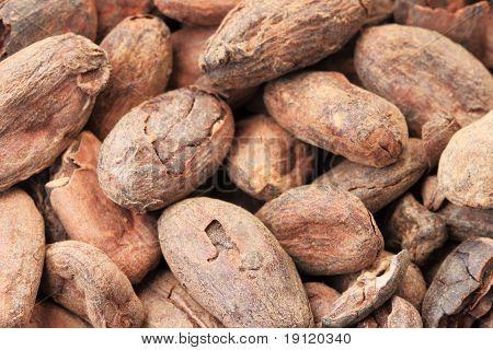 Cocoa Beans Macro