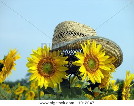 Sunflowers In The Hat