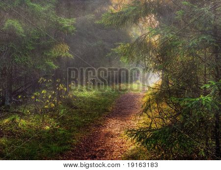 Autumn forest photographed in Russia. 60 kilometers on East from Moscow. Autumn