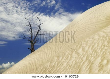 Desert dune. Death valley national park. California. USA