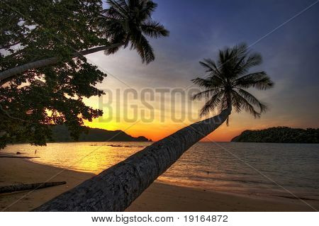 Big palm on the tropical beach in the sunset time. Siam bay. Province Trat. Koh Mak island. Kingdom Thailand