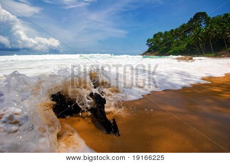 Old snag on the sand tropical beach in bad weather. Phuket island. Andaman sea. Kingdom Thailand