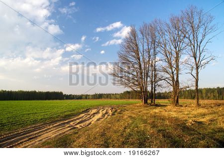 Spring trees in the field.  It is photographed in Russia. 60 kilometers from Moscow