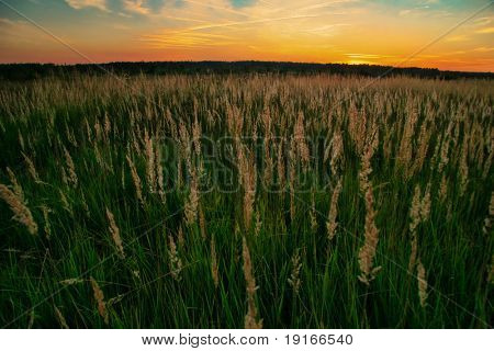 Evening in the field. It is photographed in Russia. 60 kilometers from Moscow.