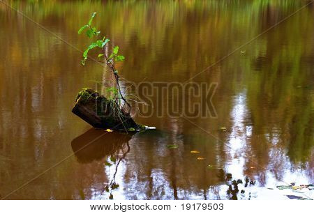 The old tree stump in the autumn lake