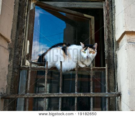 Cat sitting on old window