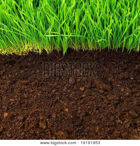 healthy grass growing in soil pattern