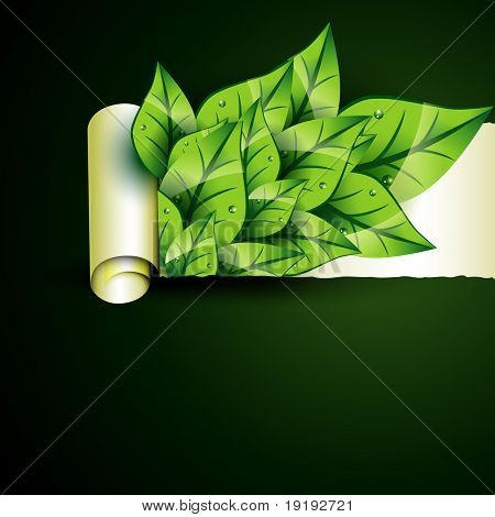 vector green leaf coming out. Eco background