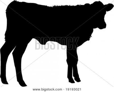 silhouette of calf