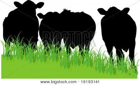 cows in field silhouette
