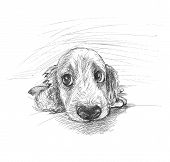 Cute Puppy Sketch poster