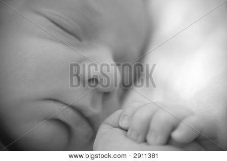 Head Of The Newborn