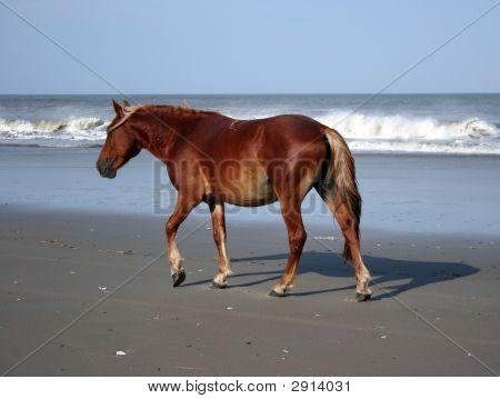 Palamino Pony On The Beach