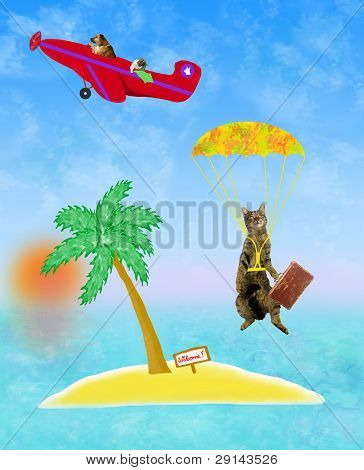 Gato está voando para uma ilha solitária