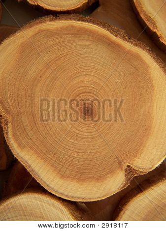 Annual Circles Of Juniper Wood