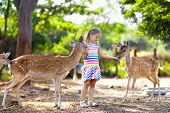 Child Feeding Wild Deer At Zoo. Kids Feed Animals. poster