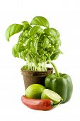 Basil, Lime, Chili & Green Bell Pepper Isolated On White Background poster