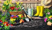 Planting flowers in sunny garden. Gardening tools and spring flowers at the backyard poster