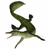 Mesosaurus Marine Reptile On White 3d Illustration - Mesosaurus Was A Carnivorous Marine Reptile Tha poster