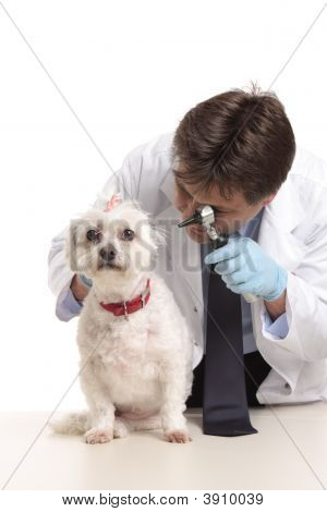 Vet Inspecting Dogs Ears