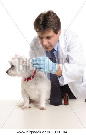 Vet Puts Eardrops Into Dogs Ears