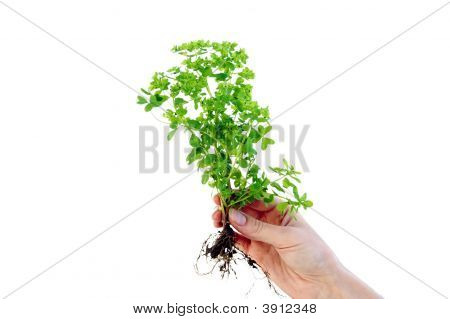 Plant In Fingers