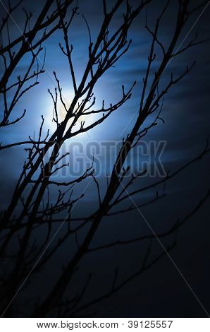 Full Moon In Foggy Dark Night, Naked Leafless Trees Silhouettes And Clouds