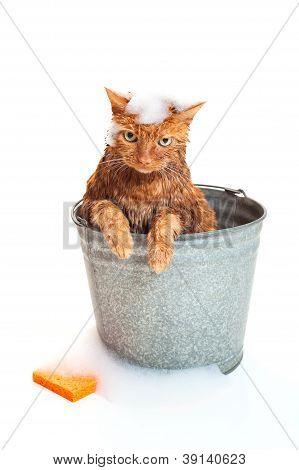 An orange cat getting a bath