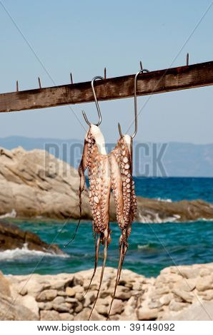 Octopus hanging to dry on the sunlight with sea and rocks in the background