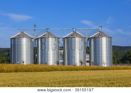 silver silos in corn field