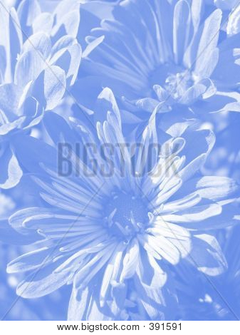 Blue Soft Floral Background