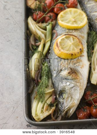 Whole Sea Bass Roasted With Fennel Lemon Garlic And Cherry Tomatoes On The Vine