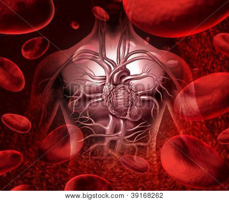 Blood System And Circulation