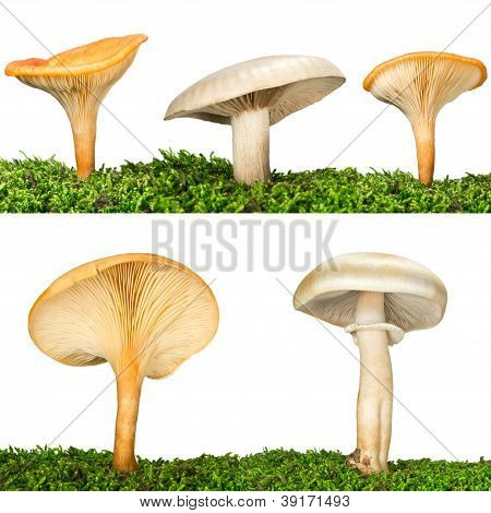 Collection of five mushrooms in the grass