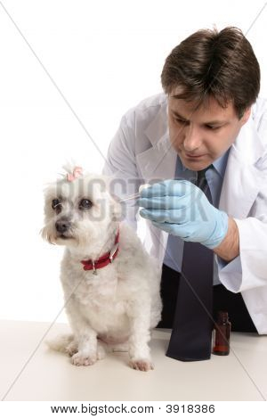 Vet Treating A Pet Dog