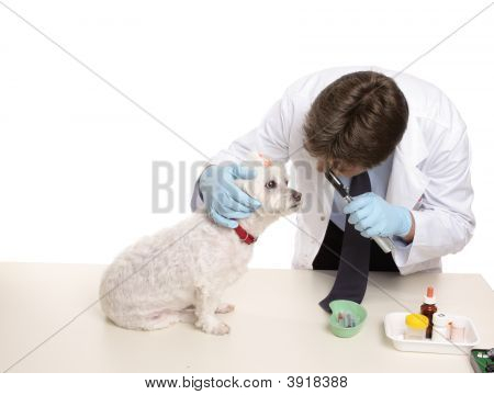 Veterinary Checkup
