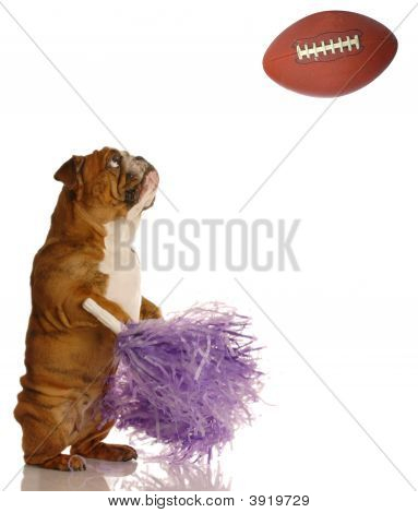 Bulldog Shaking Her Pompoms With Football