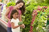 stock photo of grocery store  - Mother and daughter shopping for broccoli at a grocery store - JPG