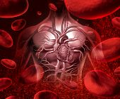 stock photo of coronary arteries  - Blood system and circultaion with a human heart cardiovascular icon with anatomy from a healthy body on a background with blood cells as a medical health care symbol of an inner organ as a medical health care concept - JPG
