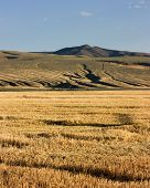 stock photo of wolverine  - Farmland near Wolverine Canyon, Blackfoot Foothills, Idaho