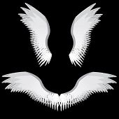 stock photo of veer  - Illustration of abstract angel wings on black background - JPG