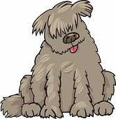 foto of newfoundland puppy  - Cartoon Illustration of Funny Purebred Newfoundland Dog or Labrador Doodle or Briard - JPG