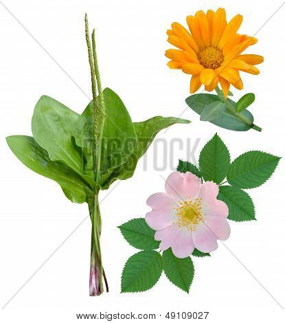 Medicinal plants and flowers