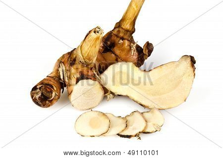 Rhizome of Galangal