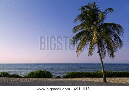 Palm Tree Along The Beach