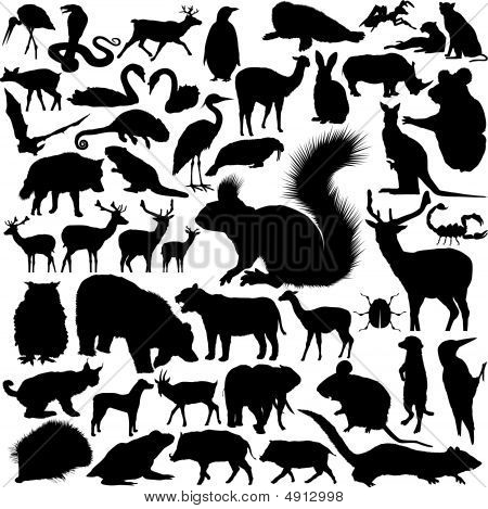 Detailed Vectoral Wild Animal Silhouettes