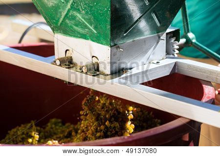 Grape harvesting machine or juicer at work with many grapes
