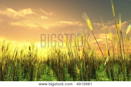Beautiful Sunset Over The Wheat Field